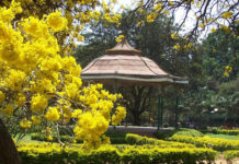Cubbon-Park: AC city of India, Bangalore India (Bengaluru)