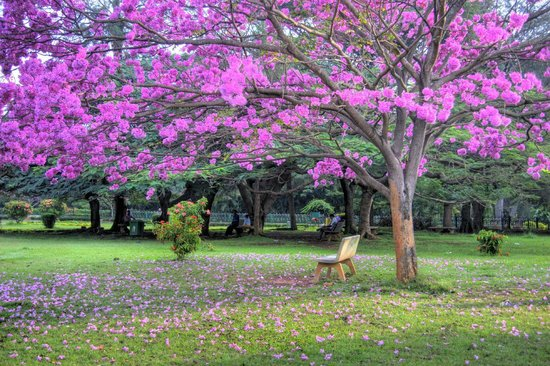 Cubbon Park - Bengaluru, Bangalore, India